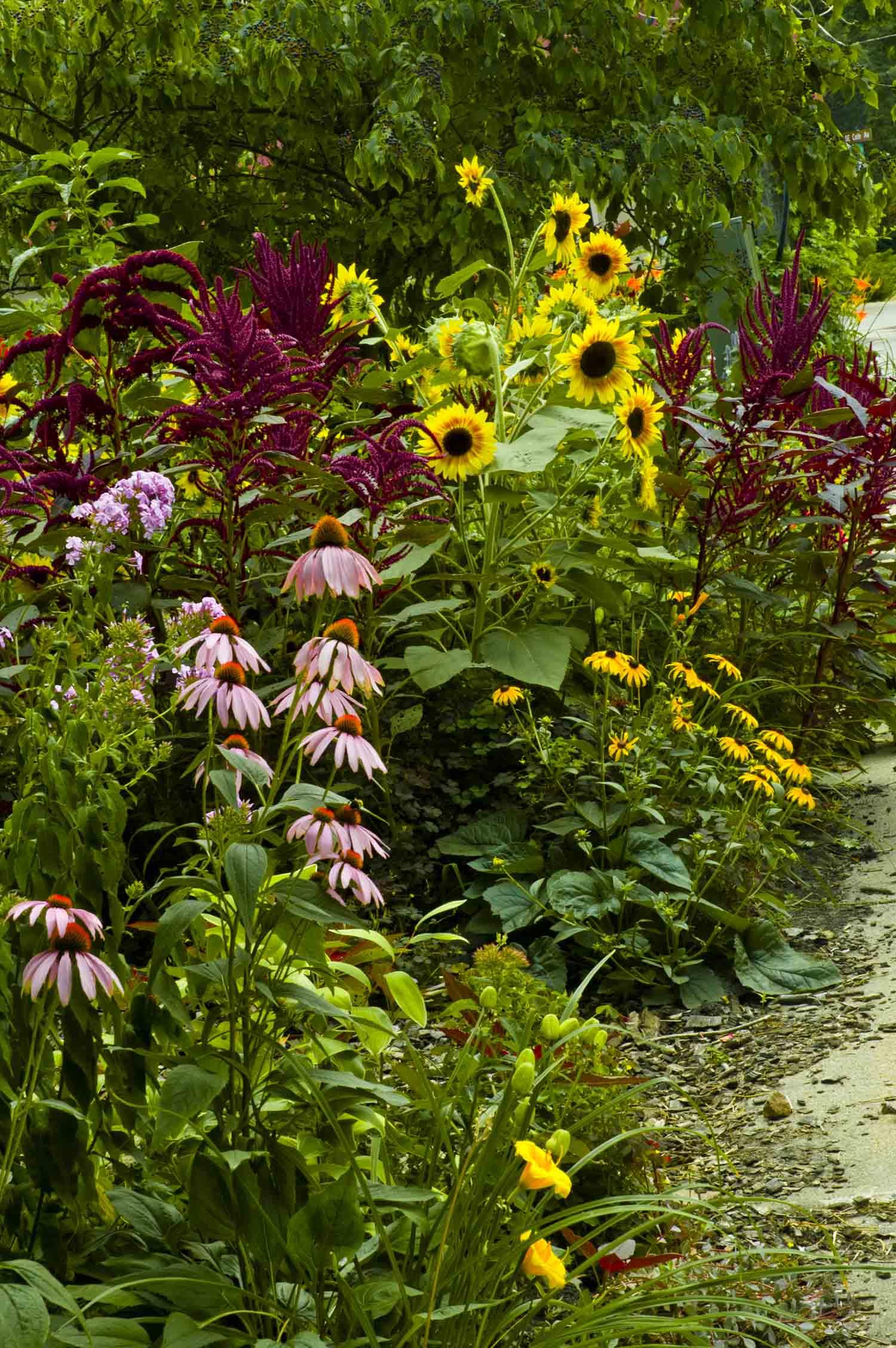 The Accord Native Garden in Van Cleve Park